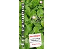 Dobrá semena Kozlíček polníček - Verte de Cambrai 2g