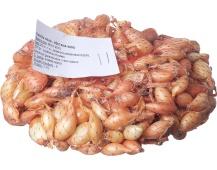Sazečka - Všetana 500 g (7-15 mm)