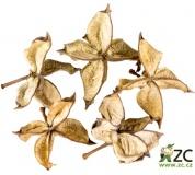 Dekorace - Cotton Flower - 5 ks