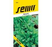 Mangold - Perpetual spinach (Gator) zelený 4g