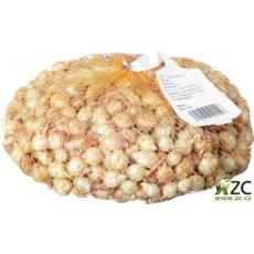 Sazečka - Štutgart 250 g (8-16 mm)