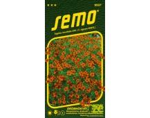 Aksamitník drobnokvětý - červený 0,2g