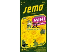 Aksamitník rozkladitý - Safari Yellow 30s - série MINI
